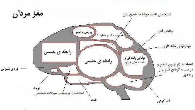مغز مردان
