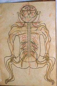 آناتومی و تشریح بدن مربوط به طب سنتی اثر ابن الیاس-تشریح اعصاب