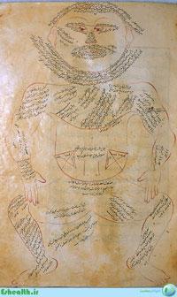 آناتومی و تشریح بدن مربوط به طب سنتی اثر ابن الیاس-تشریح عضلات