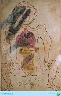 آناتومی و تشریح بدن مربوط به طب سنتی اثر ابن الیاس-اعضای مرکب