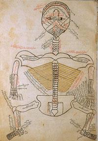 آناتومی و تشریح بدن مربوط به طب سنتی اثر ابن الیاس-تشریح استخوانها